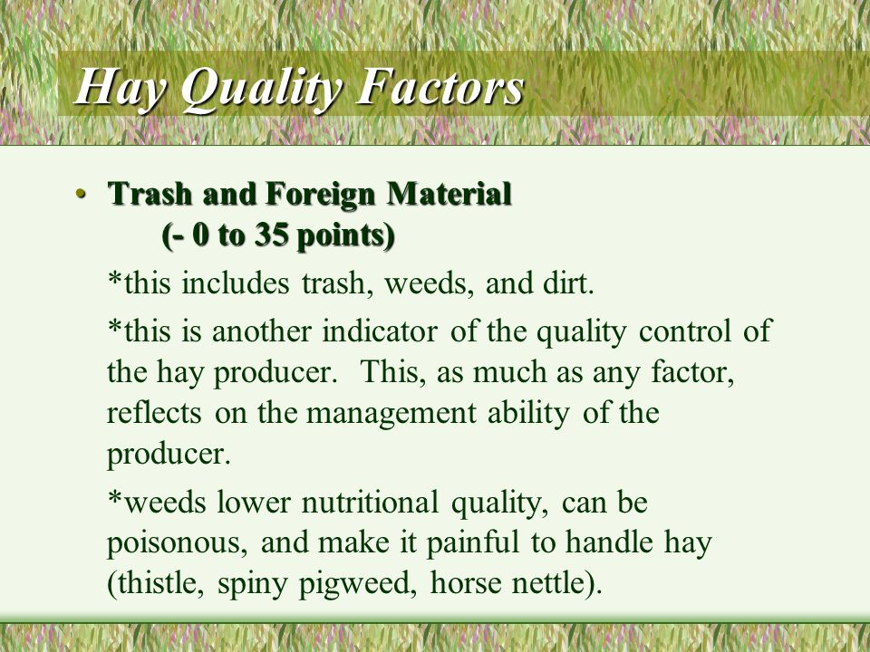 Hay Quality Factors Softness (10 points)Softness (10 points) *another indicator of maturity.