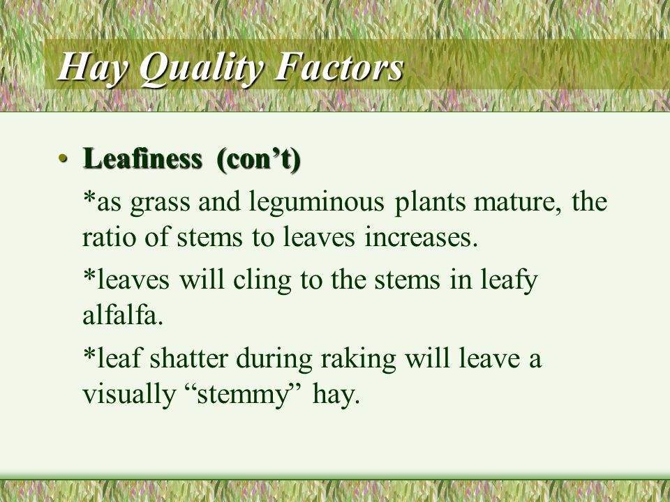 Hay Quality Factors Leafiness (30 points)Leafiness (30 points) *a factor of the ratio of leaves to stems in the bale. *leaves are critical to animal n
