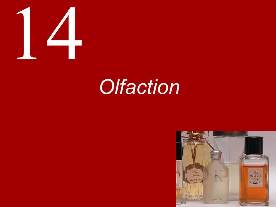 14 Olfaction