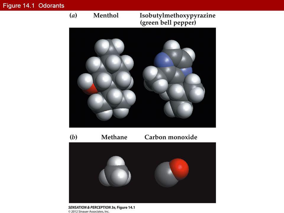Figure 14.1 Odorants