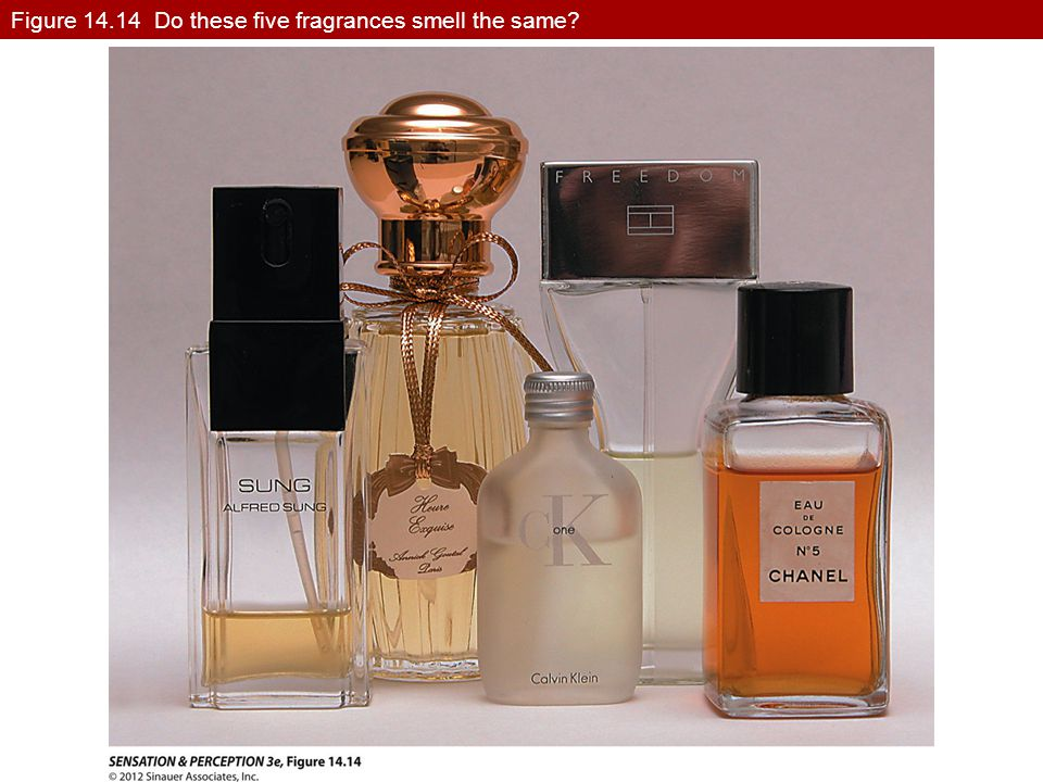 Figure 14.14 Do these five fragrances smell the same?