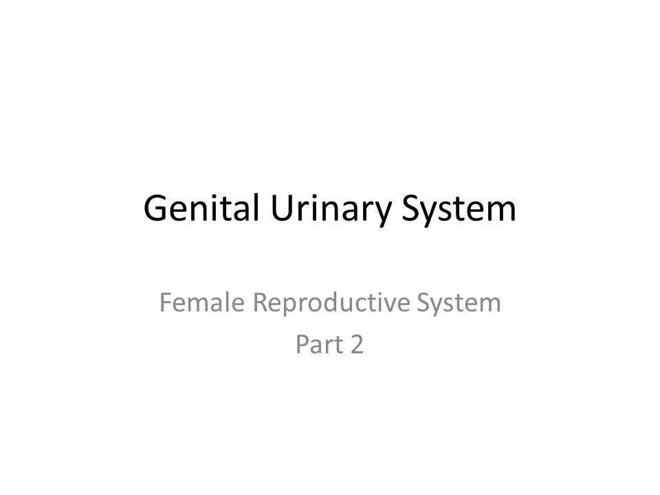 Genital Urinary System Female Reproductive System Part 2