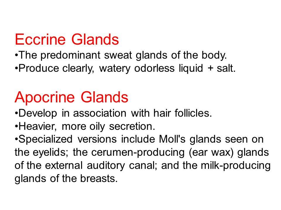 Eccrine Glands The predominant sweat glands of the body.