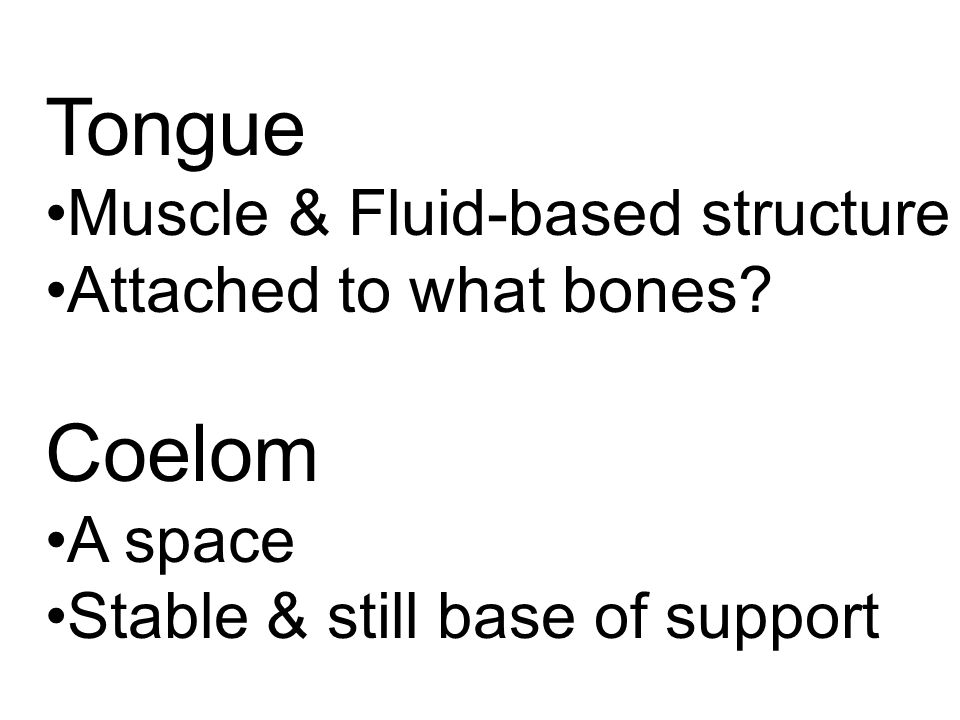 Tongue Muscle & Fluid-based structure Attached to what bones.