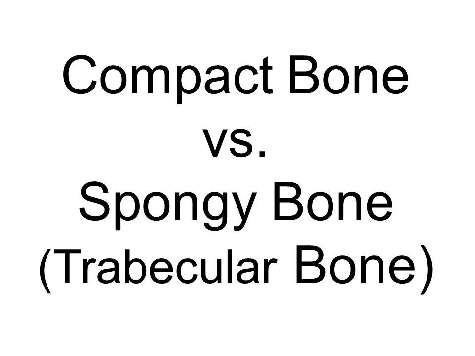 Compact Bone vs. Spongy Bone (Trabecular Bone)