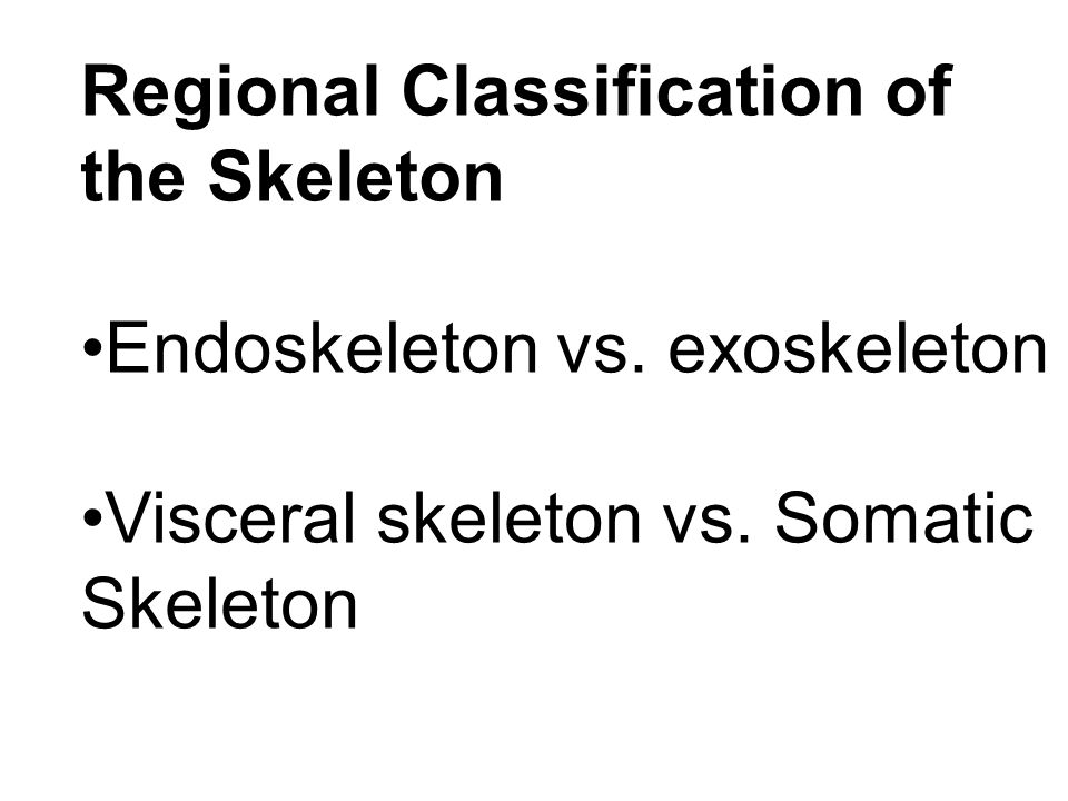 Regional Classification of the Skeleton Endoskeleton vs.