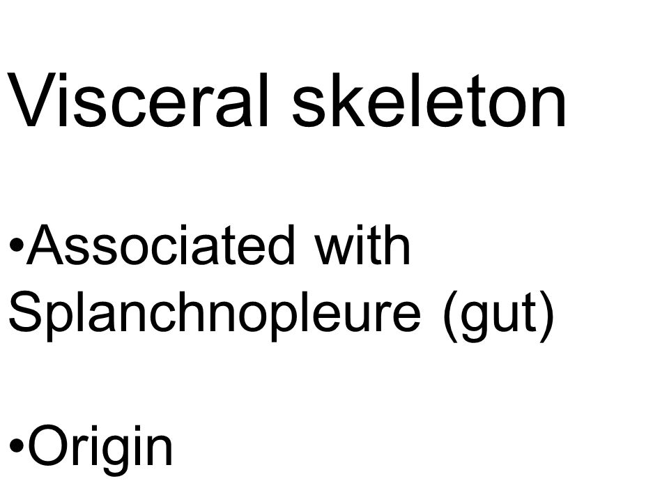 Visceral skeleton Associated with Splanchnopleure (gut) Origin