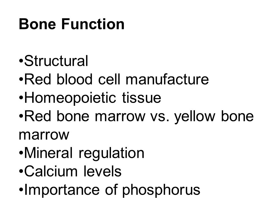 Bone Function Structural Red blood cell manufacture Homeopoietic tissue Red bone marrow vs.