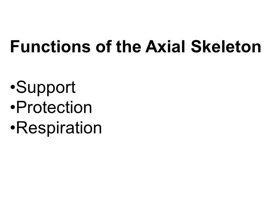 Functions of the Axial Skeleton Support Protection Respiration