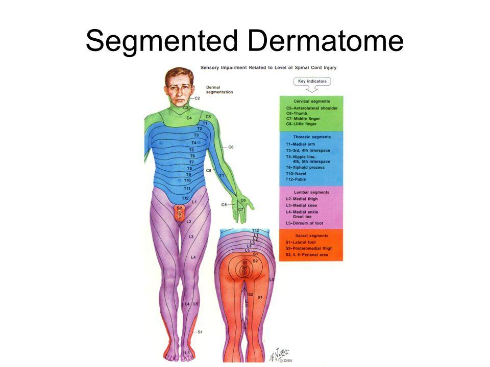 Segmented Dermatome