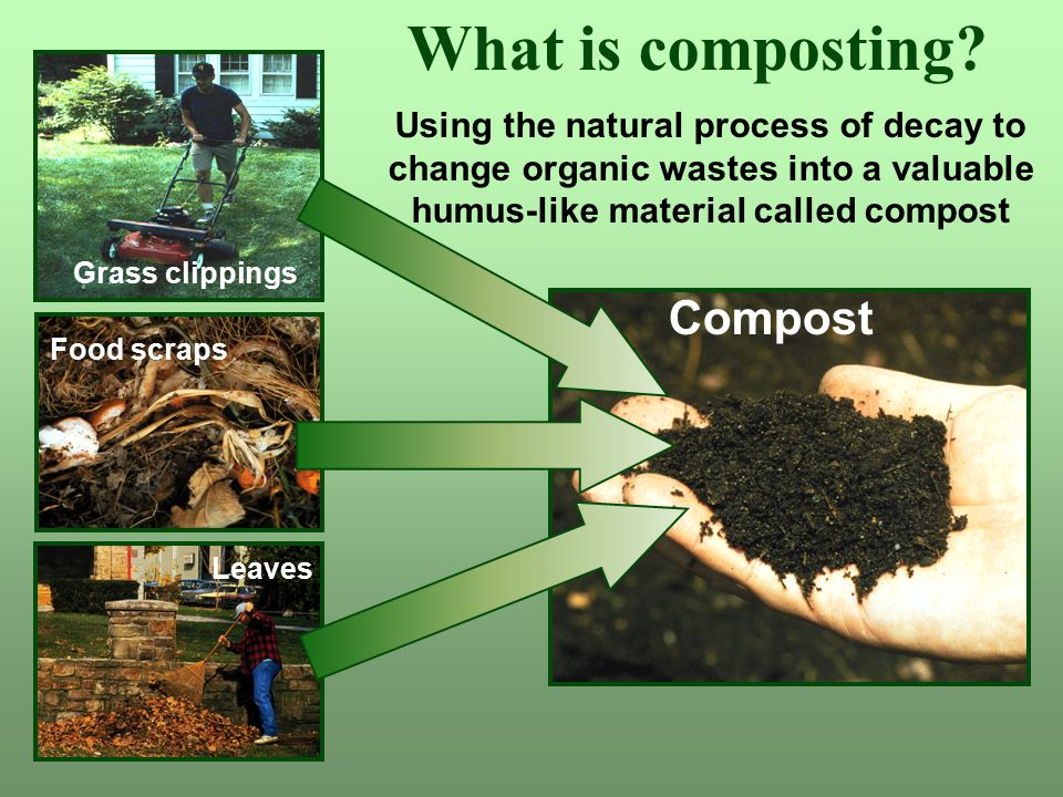 What is composting? Grass clippings Food scraps Leaves Using the natural process of decay to change organic wastes into a valuable humus-like material