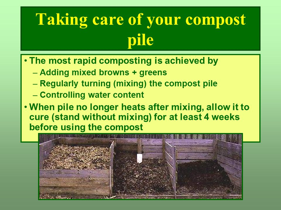 Taking care of your compost pile The most rapid composting is achieved by –Adding mixed browns + greens –Regularly turning (mixing) the compost pile –