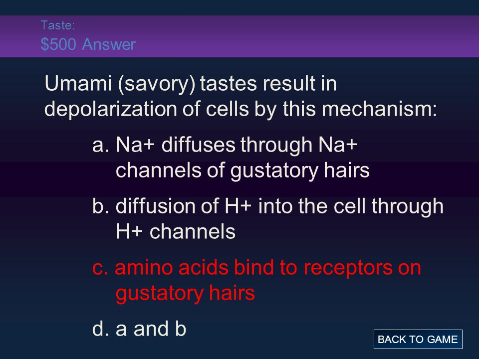 Taste: $500 Answer Umami (savory) tastes result in depolarization of cells by this mechanism: a. Na+ diffuses through Na+ channels of gustatory hairs