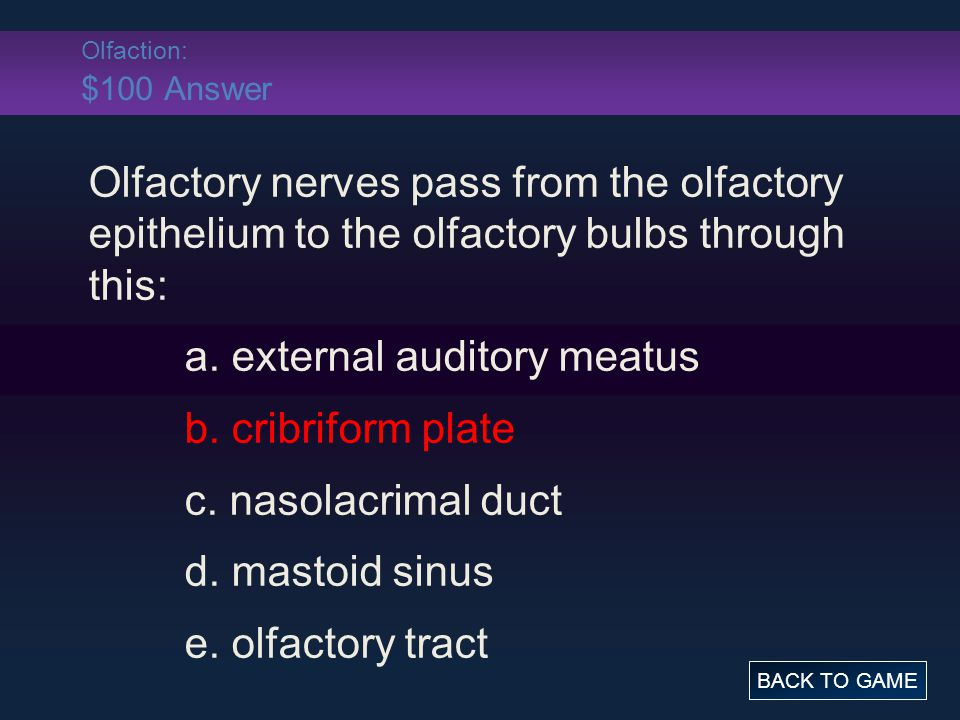 Olfaction: $100 Answer Olfactory nerves pass from the olfactory epithelium to the olfactory bulbs through this: a.
