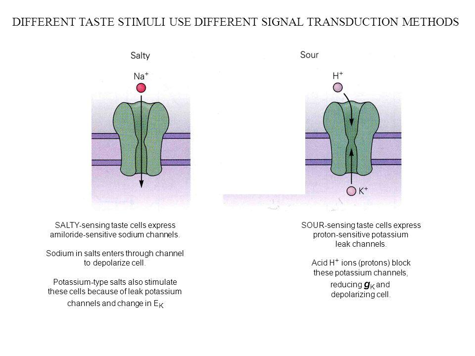 DIFFERENT TASTE STIMULI USE DIFFERENT SIGNAL TRANSDUCTION METHODS SALTY-sensing taste cells express amiloride-sensitive sodium channels. Sodium in sal