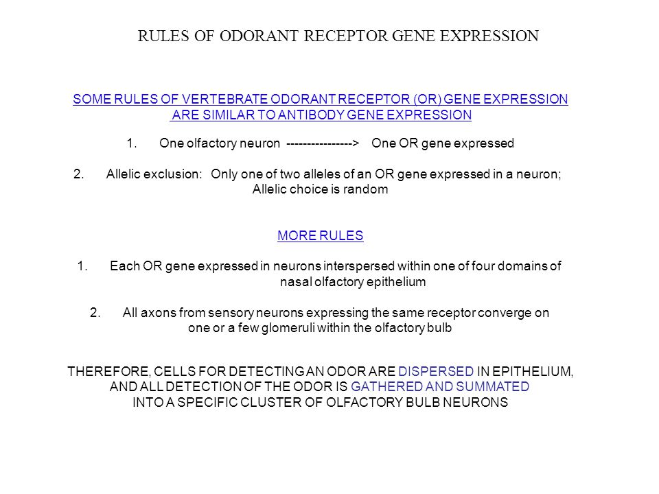 RULES OF ODORANT RECEPTOR GENE EXPRESSION SOME RULES OF VERTEBRATE ODORANT RECEPTOR (OR) GENE EXPRESSION ARE SIMILAR TO ANTIBODY GENE EXPRESSION 1. On
