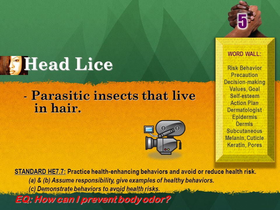 Head Lice WORD WALL: Risk Behavior Precaution Decision-making Values, Goal Self-esteem Action Plan Dermatologist Epidermis Dermis Subcutaneous Melanin, Cuticle Keratin, Pores -Parasitic insects that live in hair.