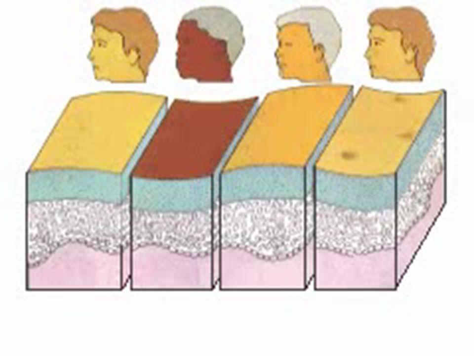 Pores WORD WALL: Risk Behavior Precaution Decision-making Values, Goal Self-esteem Action Plan Dermatologist Epidermis Dermis Subcutaneous Melanin, Cuticle Keratin, Pores Tiny holes in the skin used to secrete sweat.