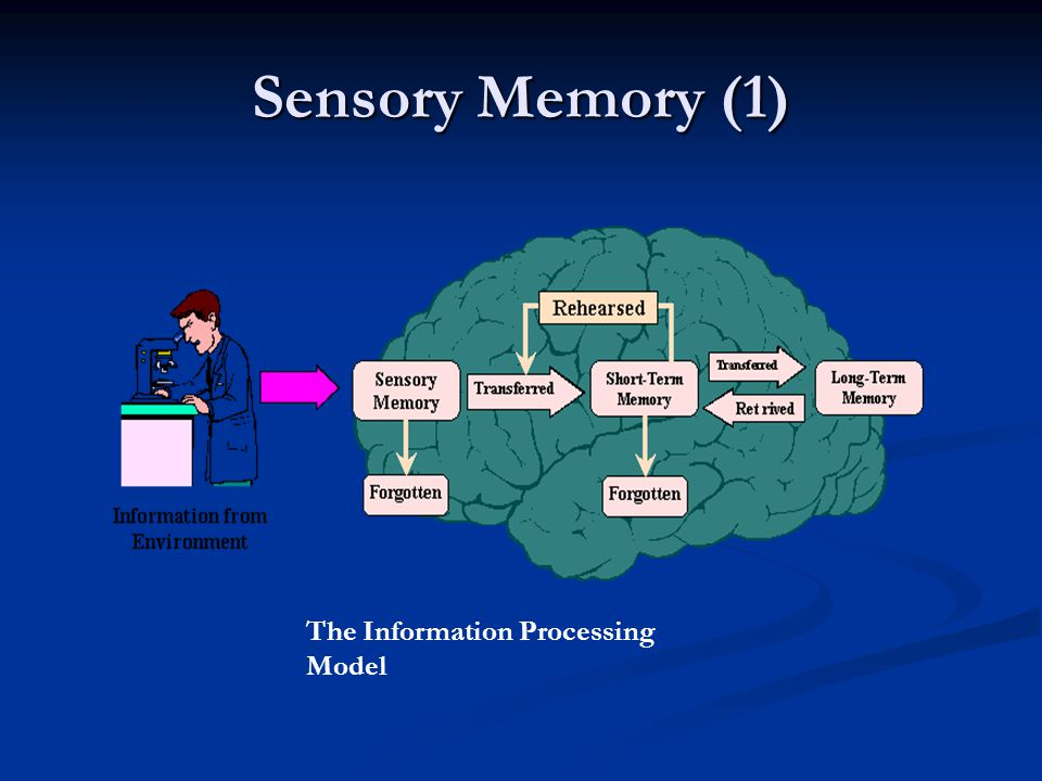 Sensory Memory (1) The Information Processing Model