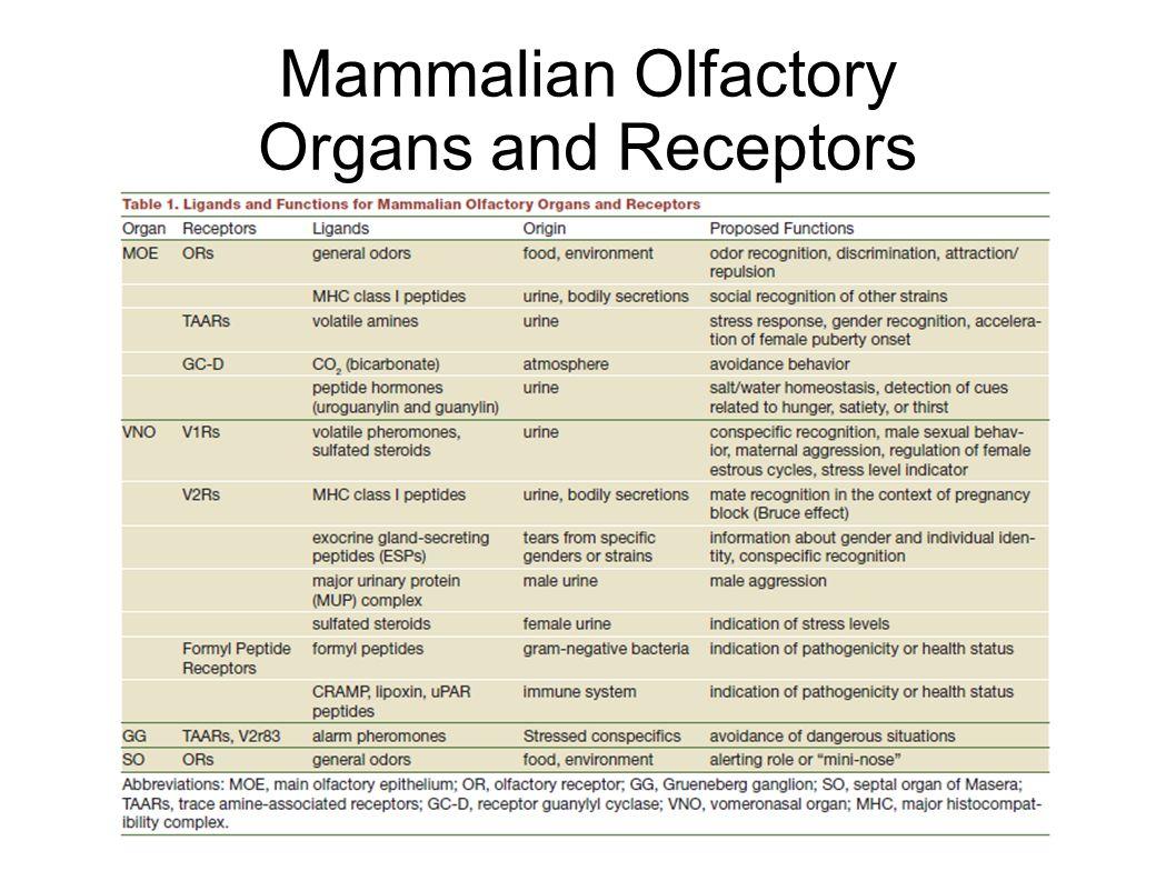 Mammalian Olfactory Organs and Receptors