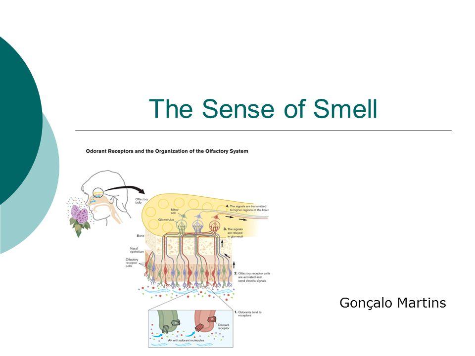 The Sense of Smell Gonçalo Martins