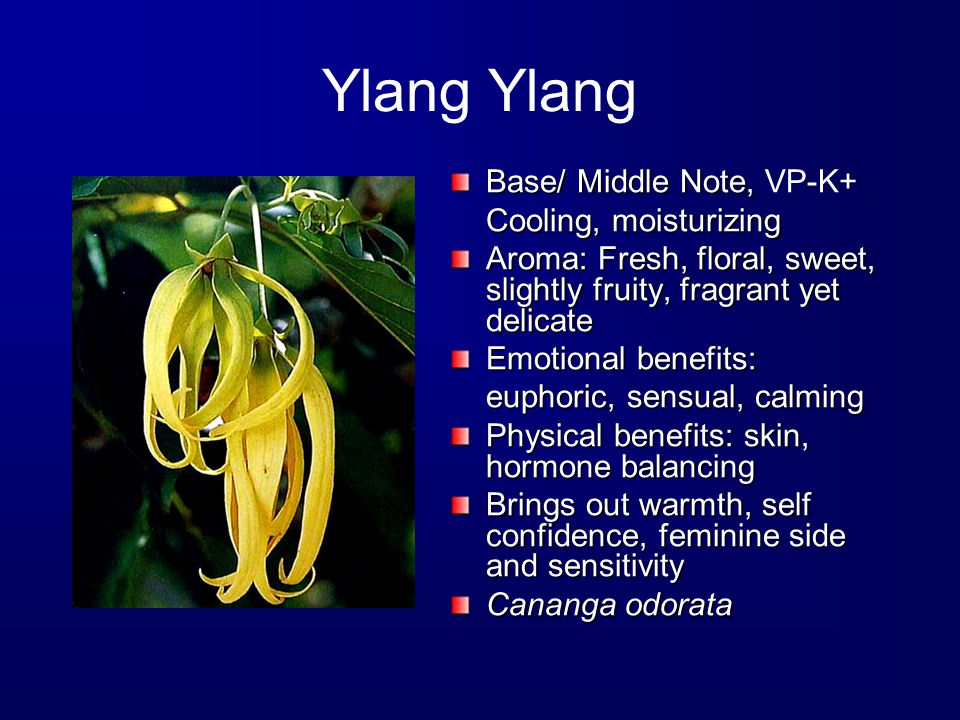 Ylang Base/ Middle Note, Base/ Middle Note, VP-K+ Cooling, moisturizing Aroma: Fresh, floral, sweet, slightly fruity, fragrant yet delicate Emotional benefits: euphoric, sensual, calming Physical benefits: skin, hormone balancing Brings out warmth, self confidence, feminine side and sensitivity Cananga odorata