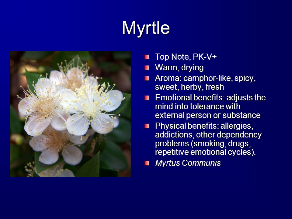 Myrtle Top Note, PK-V+ Warm, drying Aroma: camphor-like, spicy, sweet, herby, fresh Emotional benefits: adjusts the mind into tolerance with external person or substance Physical benefits: allergies, addictions, other dependency problems (smoking, drugs, repetitive emotional cycles).