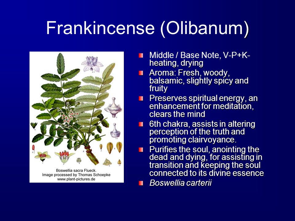 ) Frankincense (Olibanum) heating, drying Middle / Base Note, V-P+K- heating, drying Aroma: Fresh, woody, balsamic, slightly spicy and fruity Preserves spiritual energy, an enhancement for meditation, clears the mind 6th chakra, assists in altering perception of the truth and promoting clairvoyance.