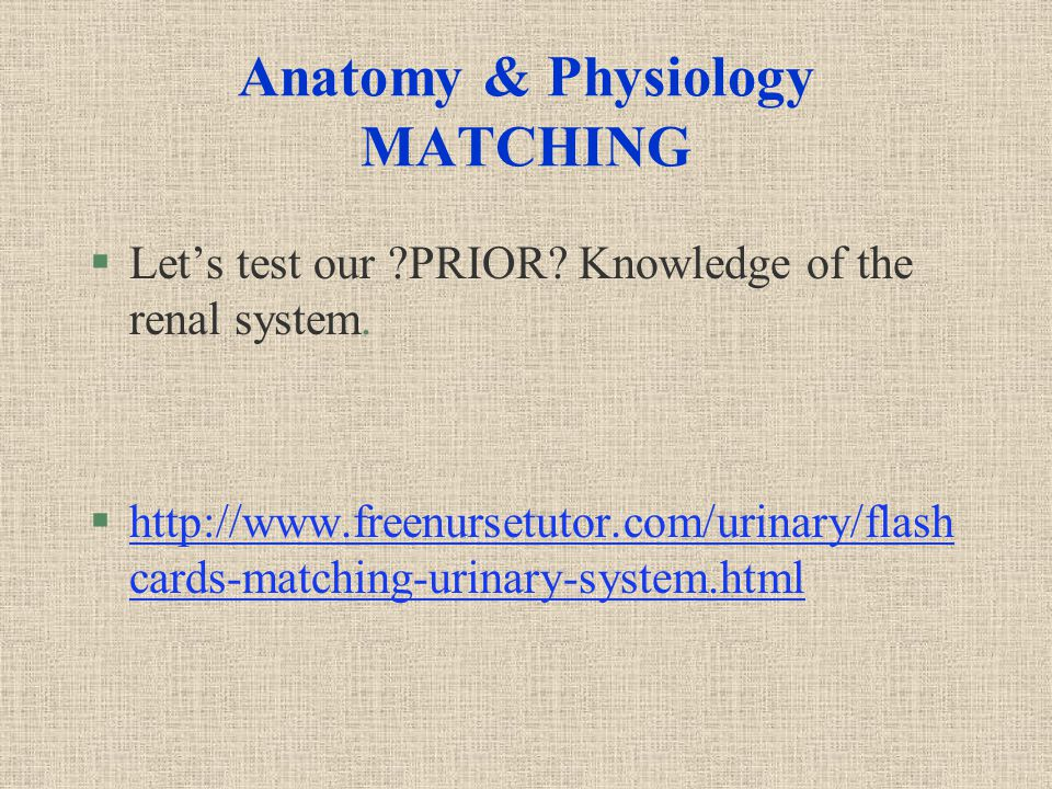 Anatomy & Physiology MATCHING §Let's test our PRIOR.