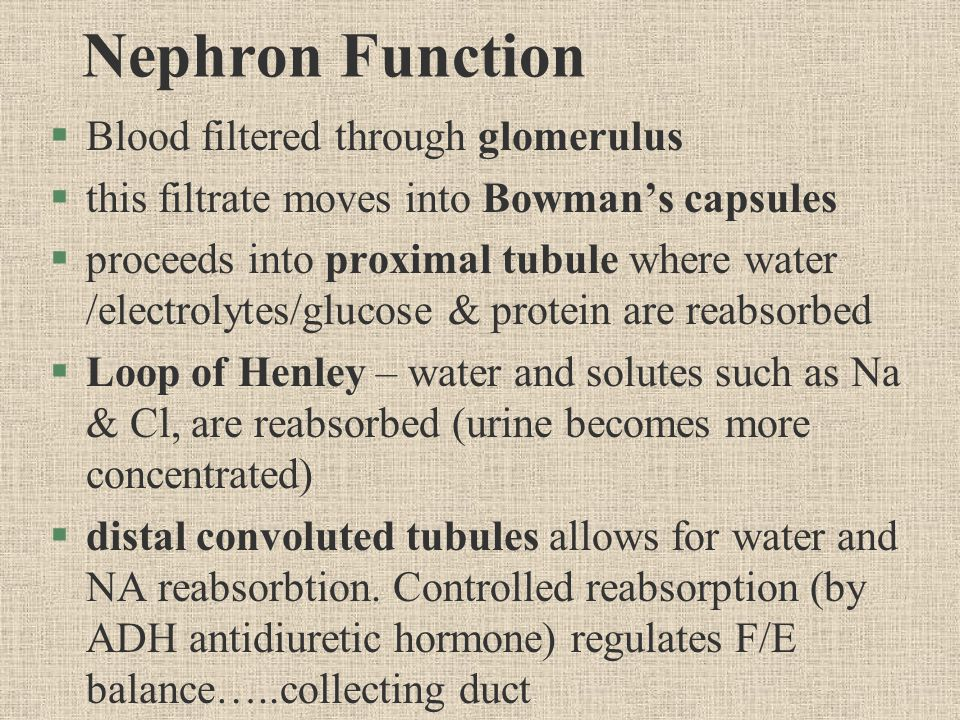 Nephron Function §Blood filtered through glomerulus §this filtrate moves into Bowman's capsules §proceeds into proximal tubule where water /electrolytes/glucose & protein are reabsorbed §Loop of Henley – water and solutes such as Na & Cl, are reabsorbed (urine becomes more concentrated) §distal convoluted tubules allows for water and NA reabsorbtion.
