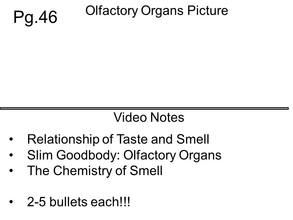 Video Notes Olfactory Organs Picture Pg.46 Relationship of Taste and Smell Slim Goodbody: Olfactory Organs The Chemistry of Smell 2-5 bullets each!!!
