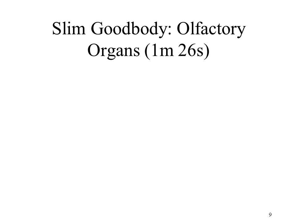 10 Where do you think the olfactory organs are located.