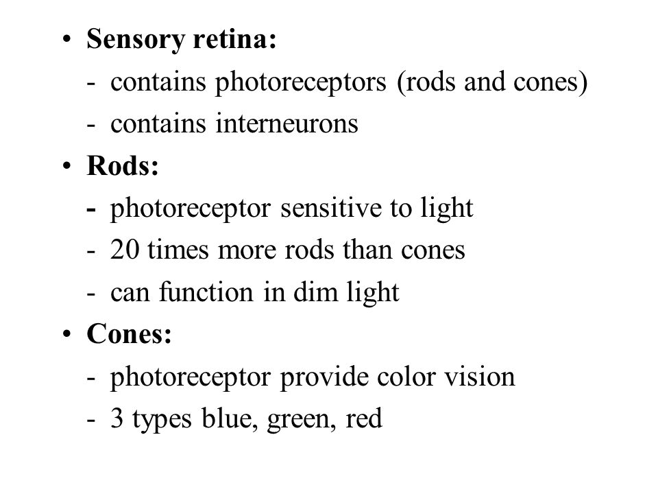 Sensory retina: - contains photoreceptors (rods and cones) - contains interneurons Rods: - photoreceptor sensitive to light - 20 times more rods than cones - can function in dim light Cones: - photoreceptor provide color vision - 3 types blue, green, red