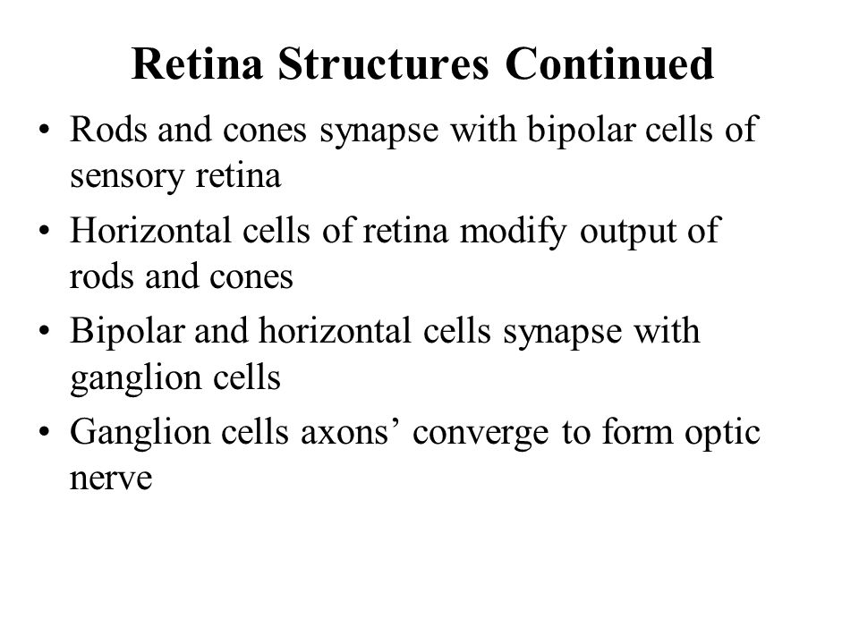 Retina Structures Continued Rods and cones synapse with bipolar cells of sensory retina Horizontal cells of retina modify output of rods and cones Bipolar and horizontal cells synapse with ganglion cells Ganglion cells axons' converge to form optic nerve
