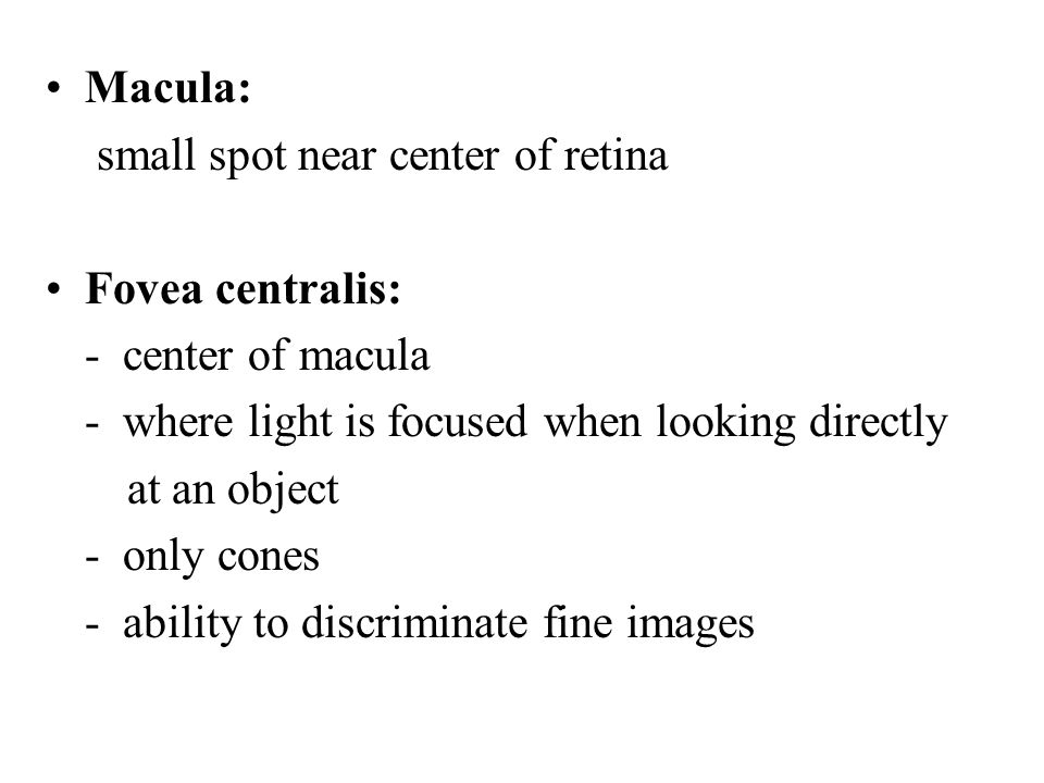 Macula: small spot near center of retina Fovea centralis: - center of macula - where light is focused when looking directly at an object - only cones - ability to discriminate fine images