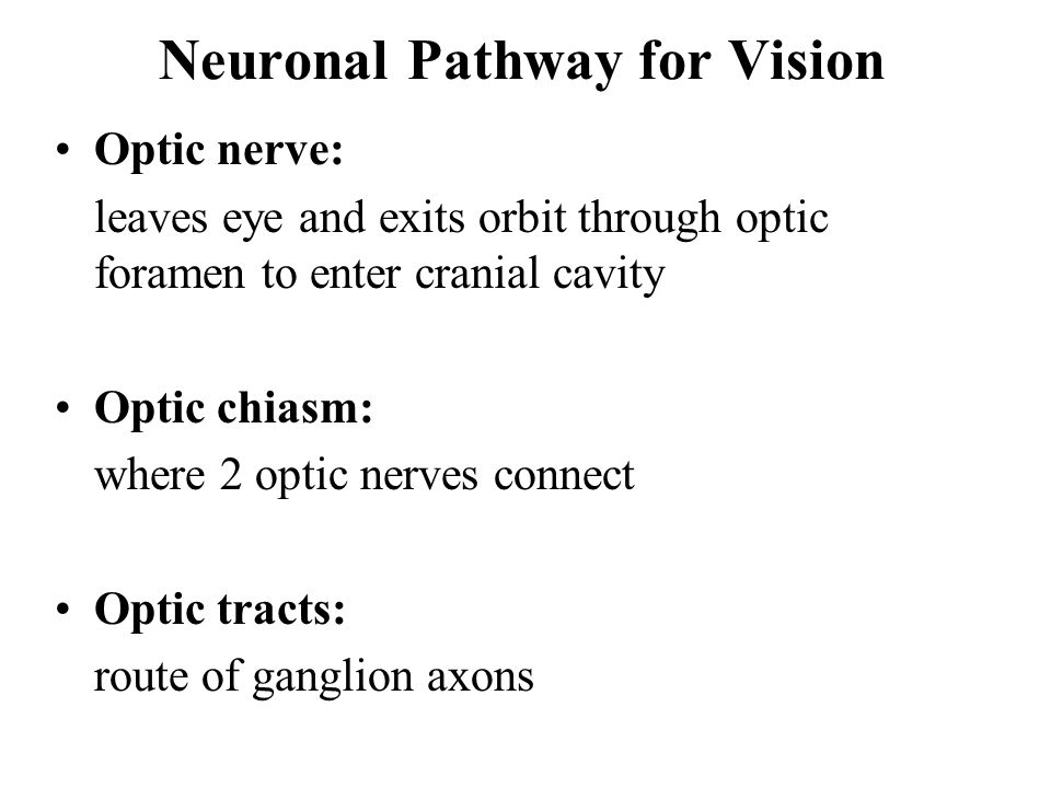 Neuronal Pathway for Vision Optic nerve: leaves eye and exits orbit through optic foramen to enter cranial cavity Optic chiasm: where 2 optic nerves connect Optic tracts: route of ganglion axons