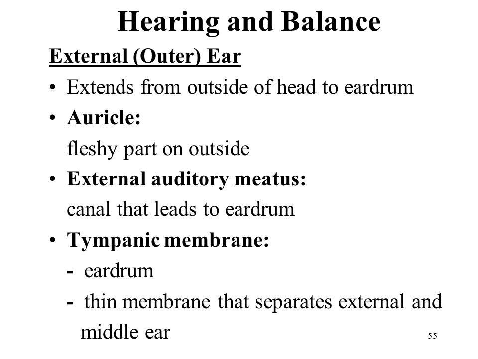 55 Hearing and Balance External (Outer) Ear Extends from outside of head to eardrum Auricle: fleshy part on outside External auditory meatus: canal that leads to eardrum Tympanic membrane: - eardrum - thin membrane that separates external and middle ear