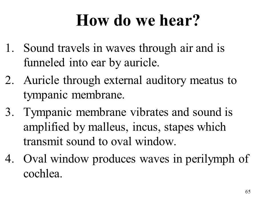 65 How do we hear.1.Sound travels in waves through air and is funneled into ear by auricle.