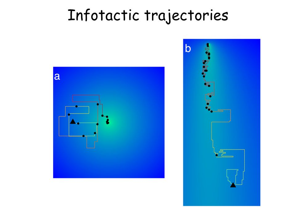 Infotactic trajectories