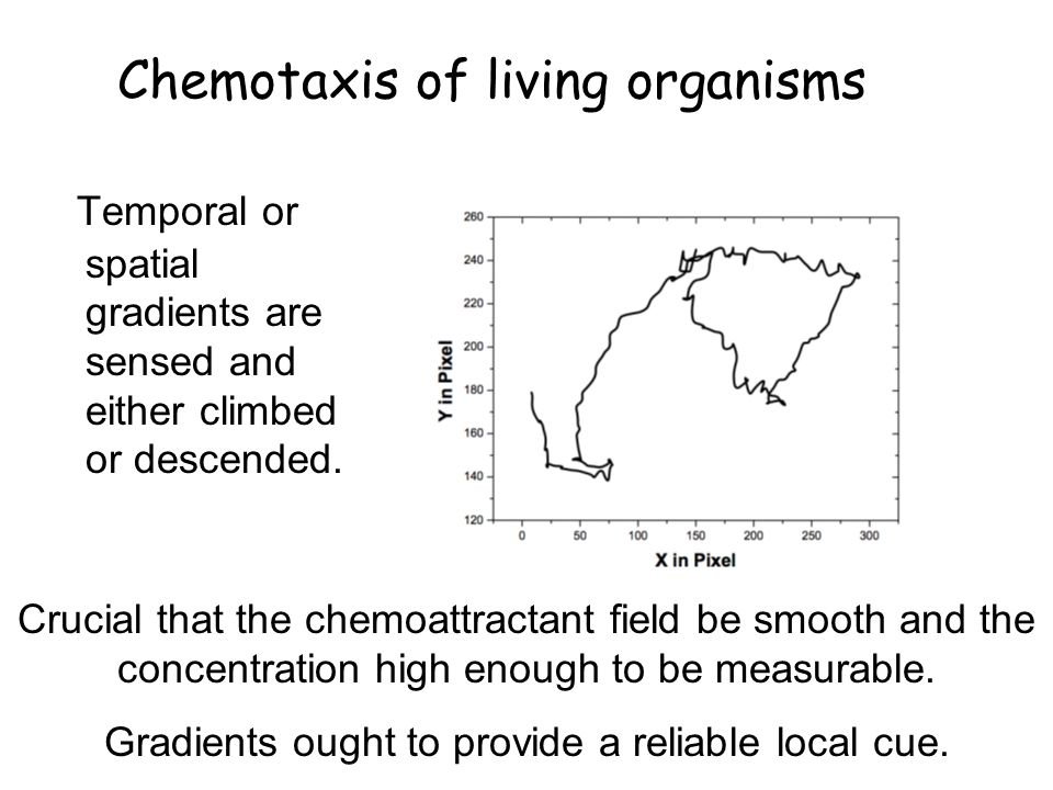 Chemotaxis of living organisms Temporal or spatial gradients are sensed and either climbed or descended.