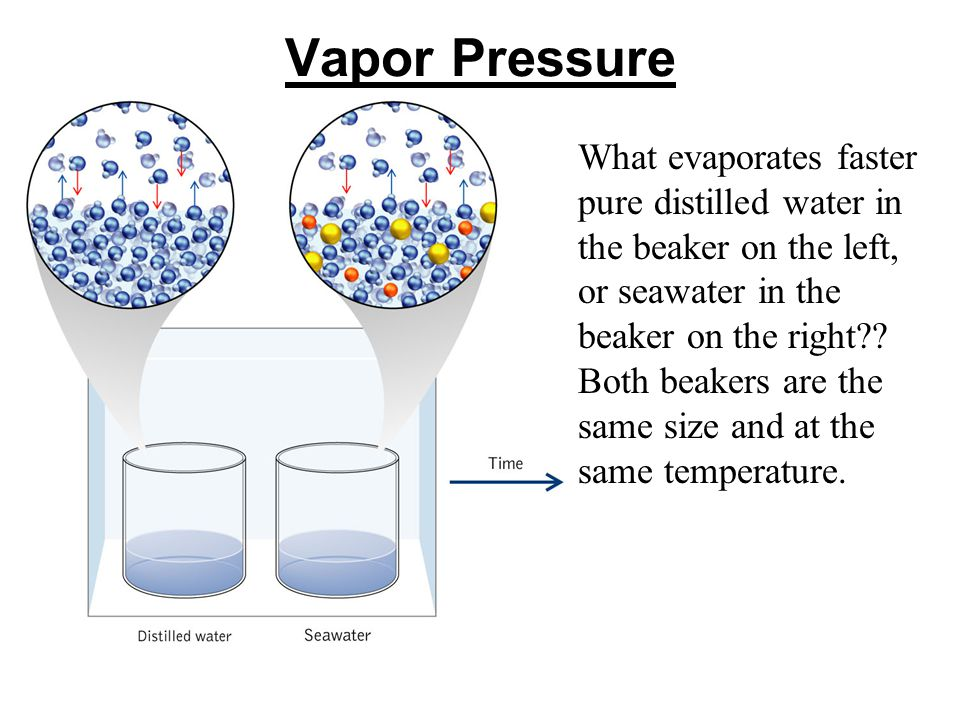 Vapor Pressure What evaporates faster pure distilled water in the beaker on the left, or seawater in the beaker on the right?.