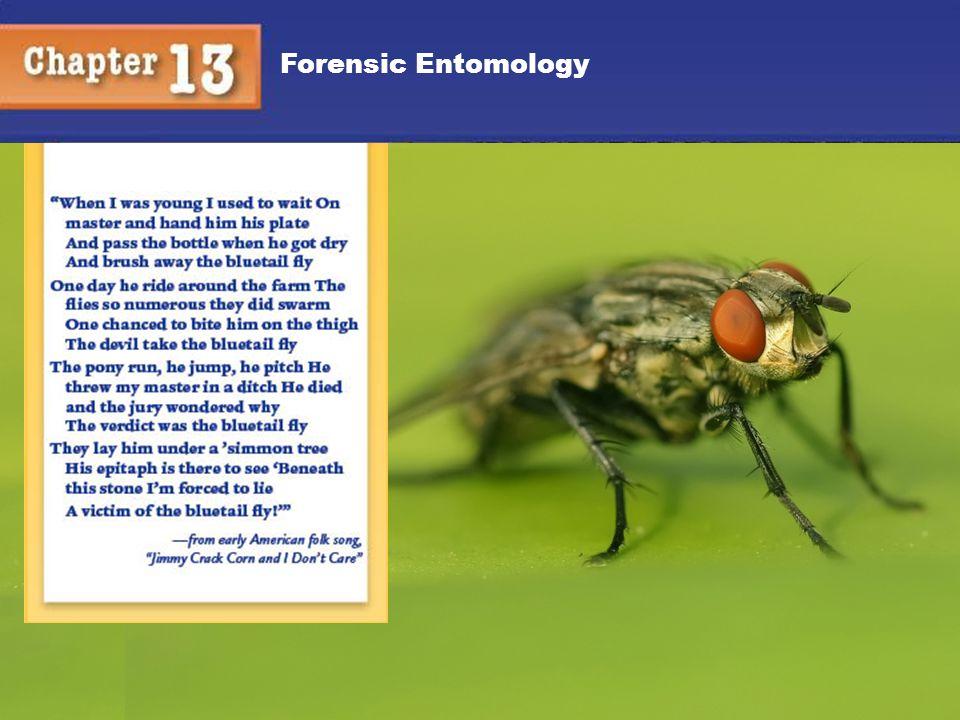 Forensic Entomology 1