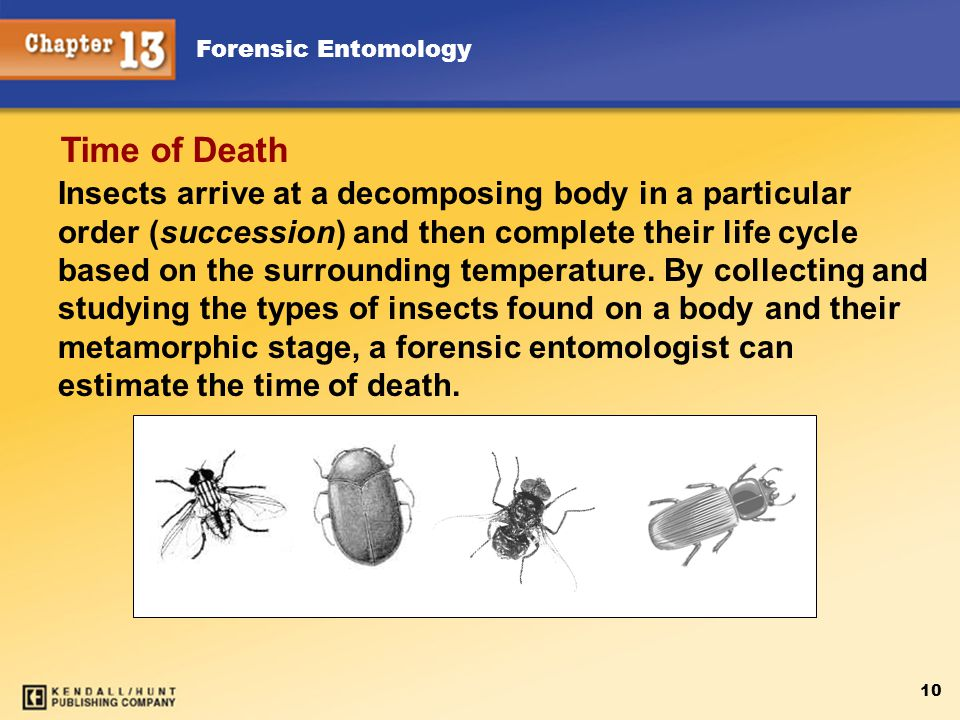 Forensic Entomology 10 Insects arrive at a decomposing body in a particular order (succession) and then complete their life cycle based on the surrounding temperature.