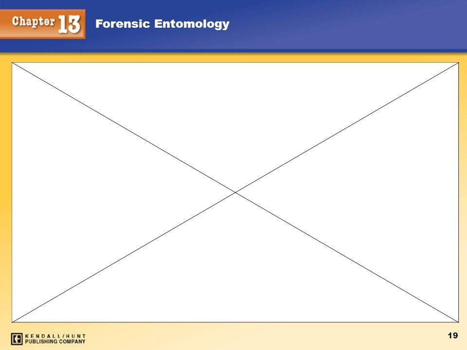 Forensic Entomology 19