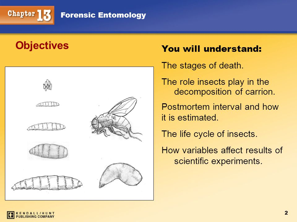 2 You will understand: The stages of death. The role insects play in the decomposition of carrion.