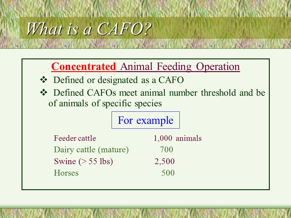 What is a CAFO.