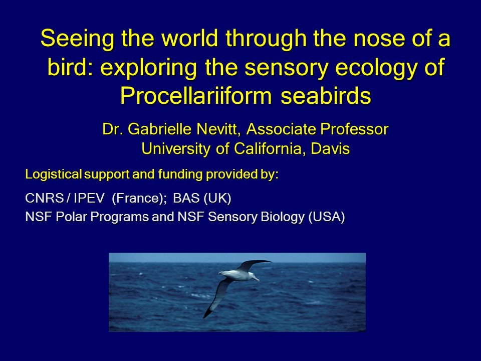 Seeing the world through the nose of a bird: exploring the sensory ecology of Procellariiform seabirds Dr.