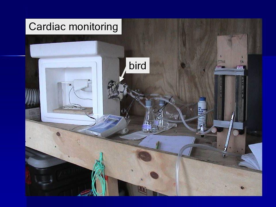 bird Cardiac monitoring