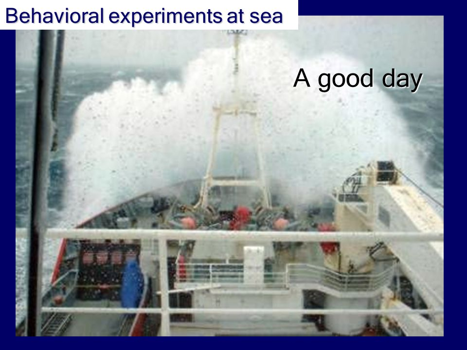 A good day Behavioral experiments at sea