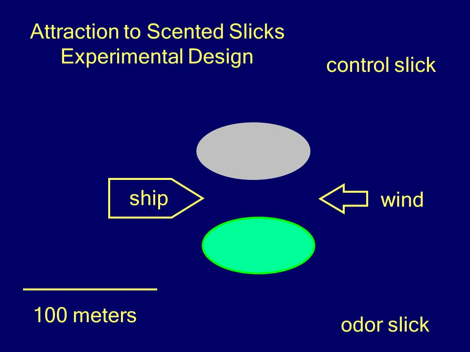 ship control slick odor slick wind 100 meters Attraction to Scented Slicks Experimental Design